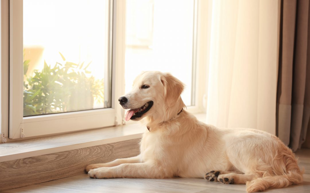 Should You Buy a New Window — Or a Soundproof Window Insert?